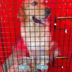 Gaiola para transporte de cachorro preço